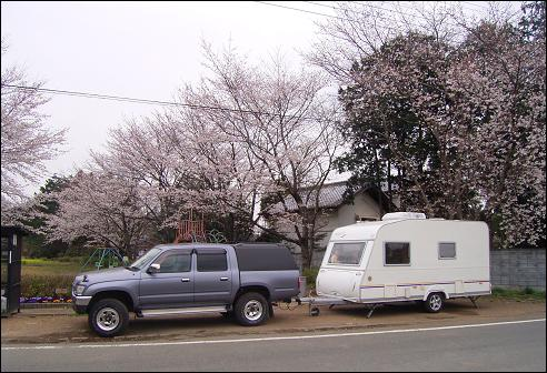 花見デイキャンプ