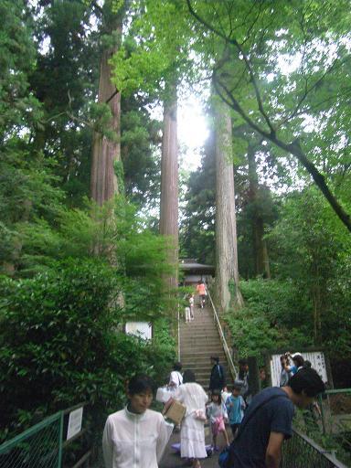 箱島不動堂の大杉